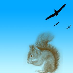 Photoshop Brushes - Squirrel