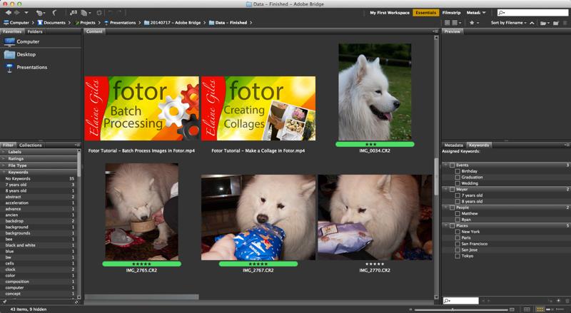 Adobe Bridge - Content